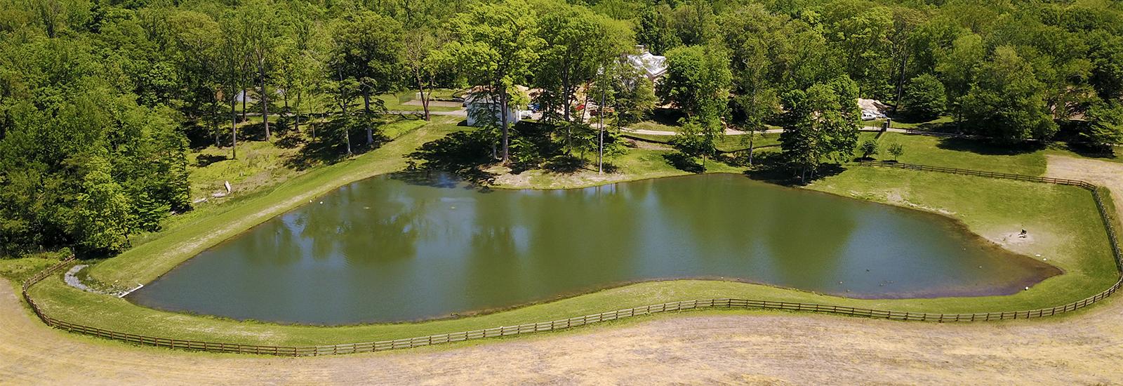 Chelsey Swan Pond
